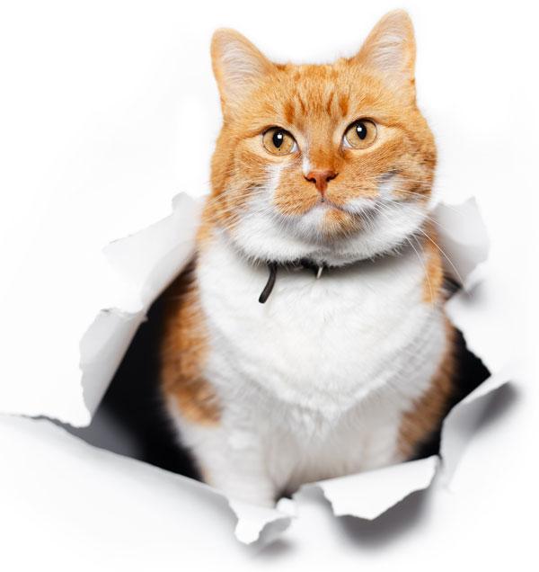 Cattery Website Design Cat