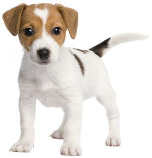 Dog boarding website design puppy