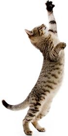 Cattery Website Design Jumping Cat