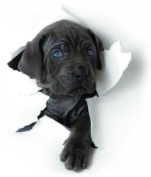 Pet Services Website Design Dog