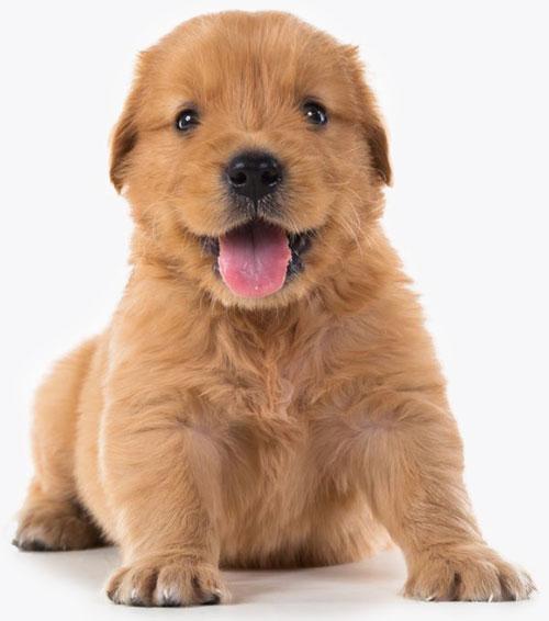Pet Services Website Design Puppy