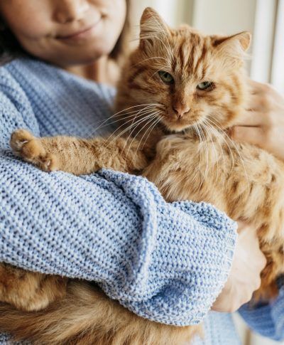 owner-petting-adorable-cat-scaled.jpg